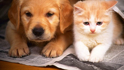 cane-gatto-cuccioli